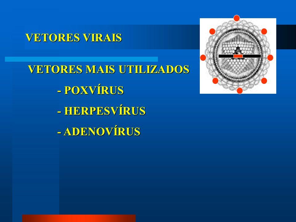 VETORES VIRAIS VETORES MAIS UTILIZADOS - POXVÍRUS - HERPESVÍRUS - ADENOVÍRUS