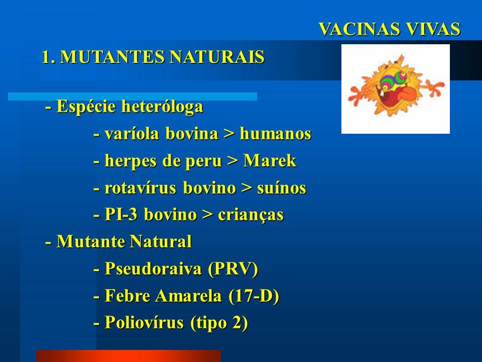 VACINAS VIVAS 1. MUTANTES NATURAIS. - Espécie heteróloga. - varíola bovina > humanos. - herpes de peru > Marek.