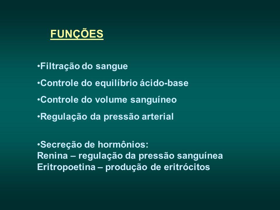 FUNÇÕES Filtração do sangue Controle do equilíbrio ácido-base