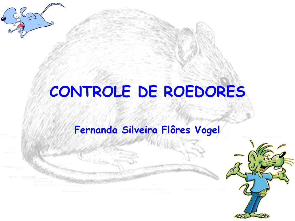 Fernanda Silveira Flôres Vogel