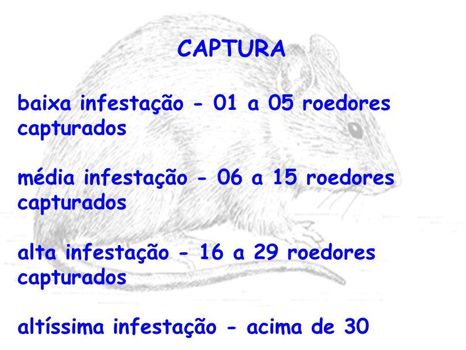 CAPTURA baixa infestação - 01 a 05 roedores capturados