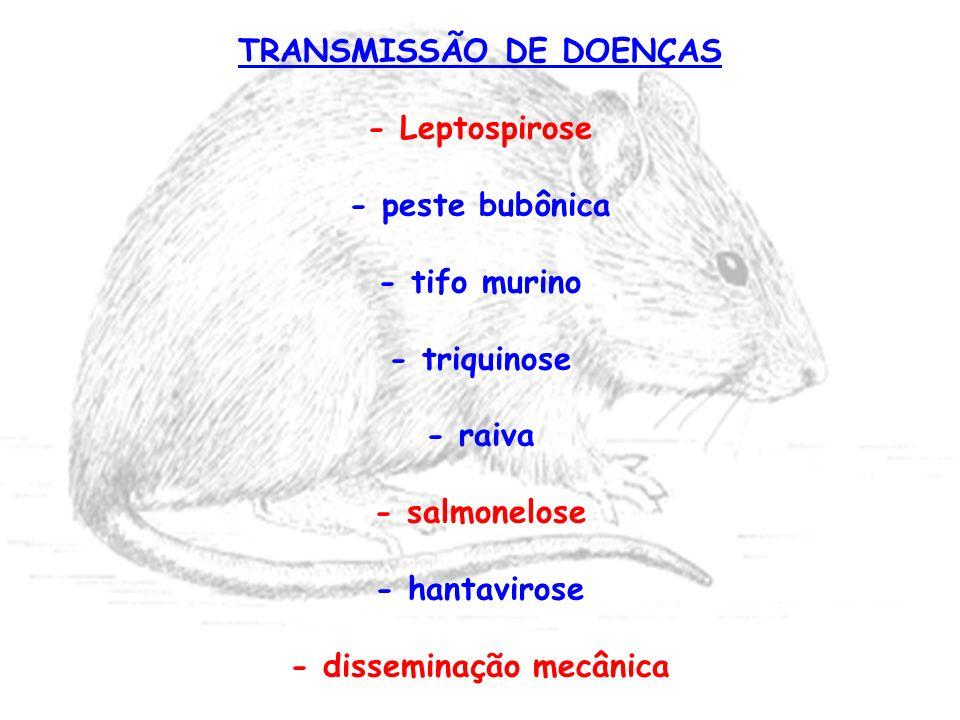 TRANSMISSÃO DE DOENÇAS - disseminação mecânica