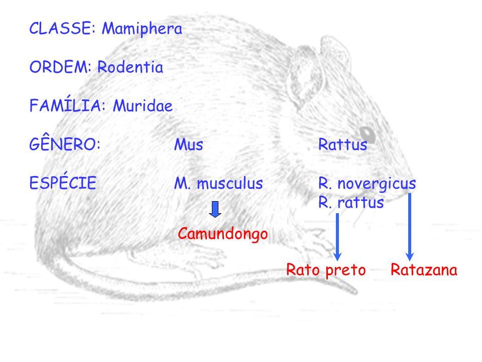 CLASSE: Mamiphera ORDEM: Rodentia. FAMÍLIA: Muridae. GÊNERO: Mus Rattus. ESPÉCIE M. musculus R. novergicus.