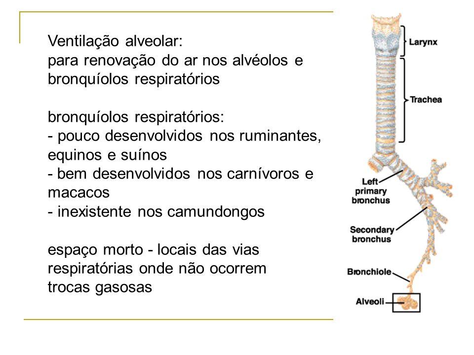 Ventilação alveolar: para renovação do ar nos alvéolos e. bronquíolos respiratórios. bronquíolos respiratórios: