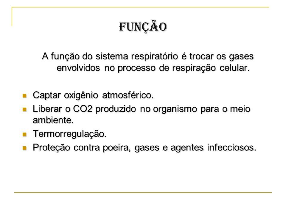 Função A função do sistema respiratório é trocar os gases envolvidos no processo de respiração celular.