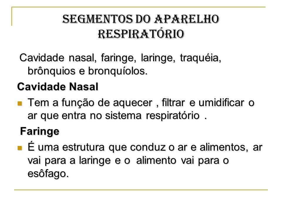 SEGMENTOS DO APARELHO RESPIRATÓRIO