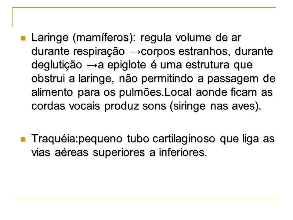 Laringe (mamíferos): regula volume de ar durante respiração →corpos estranhos, durante deglutição →a epiglote é uma estrutura que obstrui a laringe, não permitindo a passagem de alimento para os pulmões.Local aonde ficam as cordas vocais produz sons (siringe nas aves).