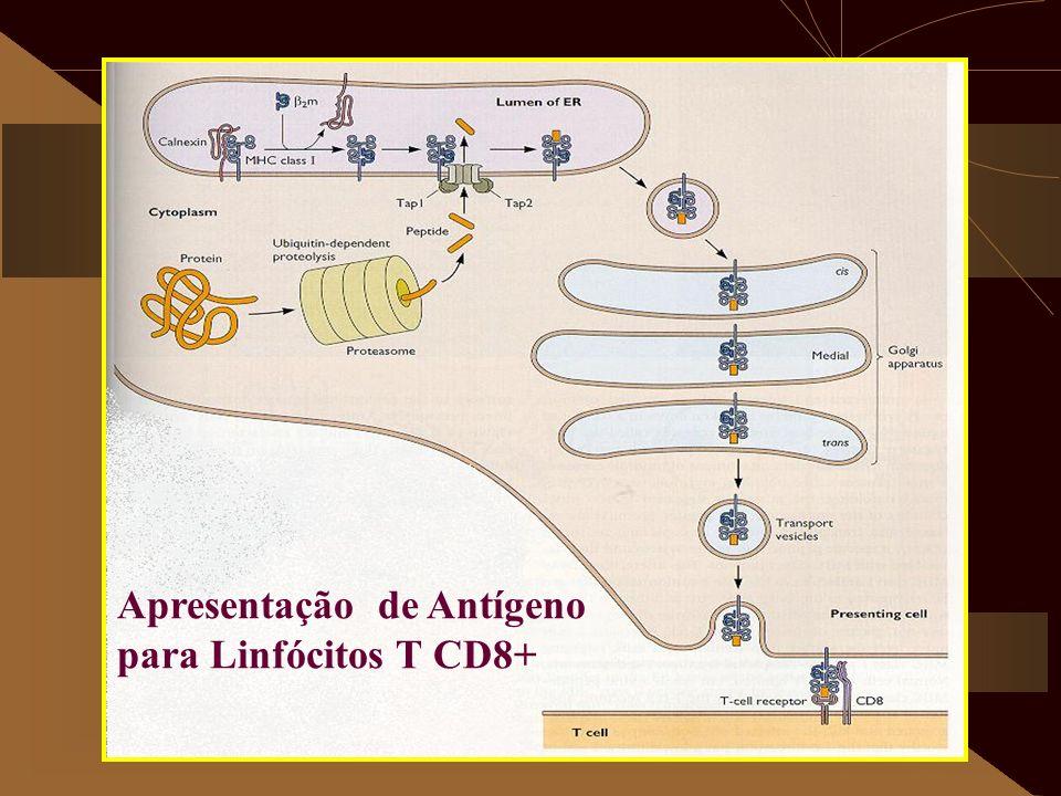 Apresentação de Antígeno