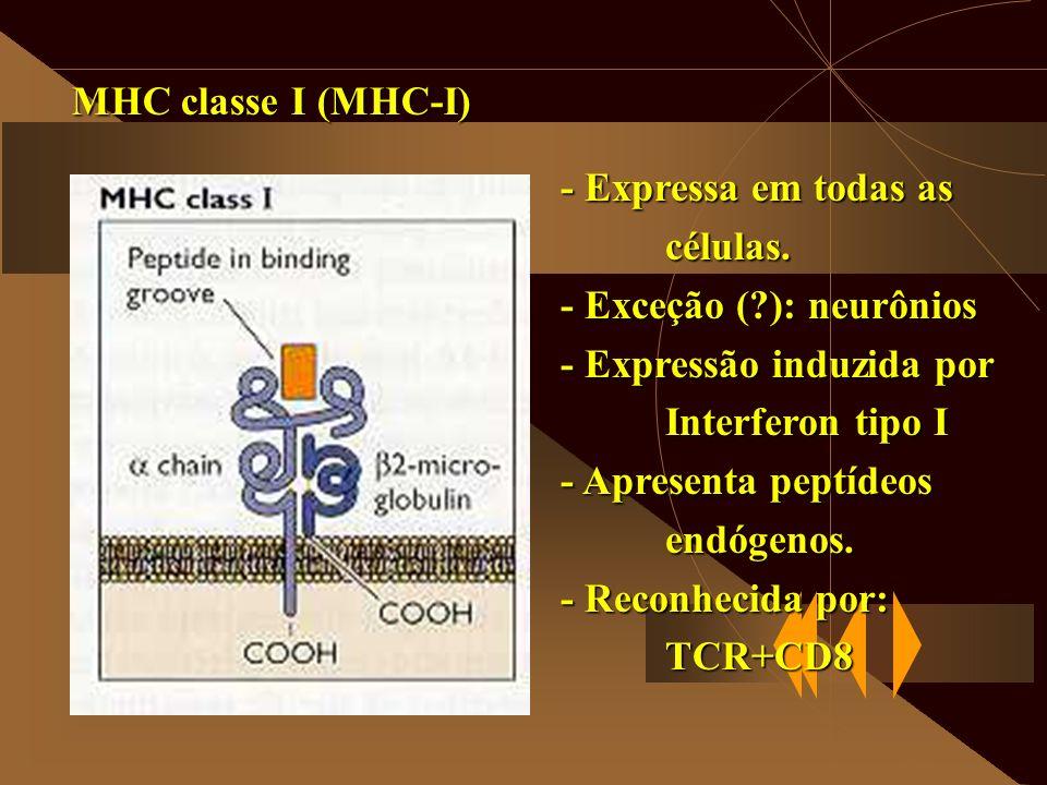MHC classe I (MHC-I) - Expressa em todas as. células. - Exceção ( ): neurônios. - Expressão induzida por.