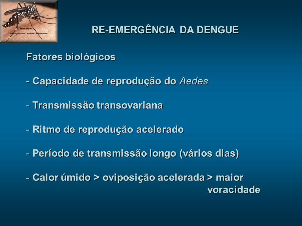 RE-EMERGÊNCIA DA DENGUE