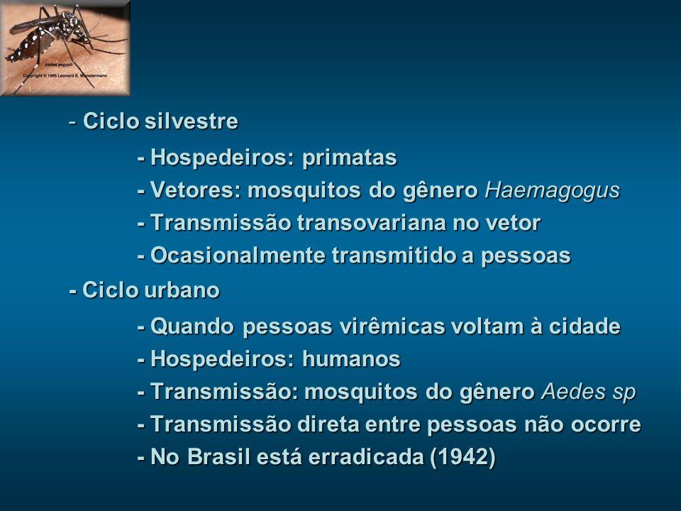 Ciclo silvestre - Hospedeiros: primatas. - Vetores: mosquitos do gênero Haemagogus. - Transmissão transovariana no vetor.