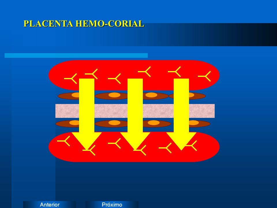 PLACENTA HEMO-CORIAL