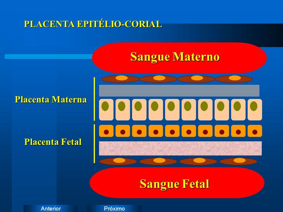 Sangue Materno Sangue Fetal PLACENTA EPITÉLIO-CORIAL Placenta Materna