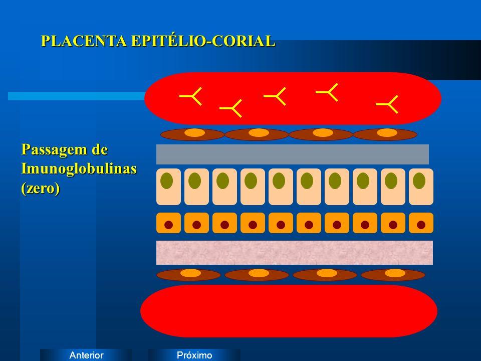 PLACENTA EPITÉLIO-CORIAL