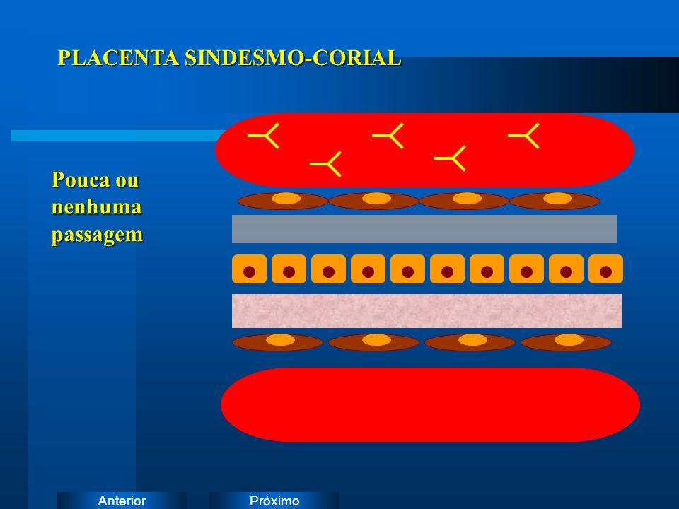 PLACENTA SINDESMO-CORIAL