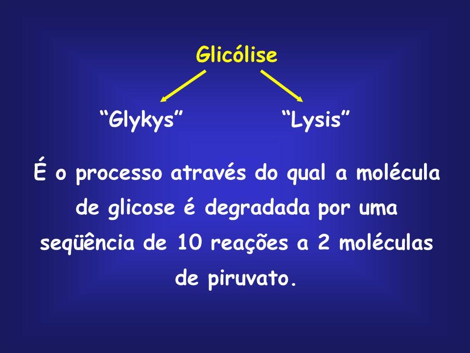 Glicólise Glykys Lysis