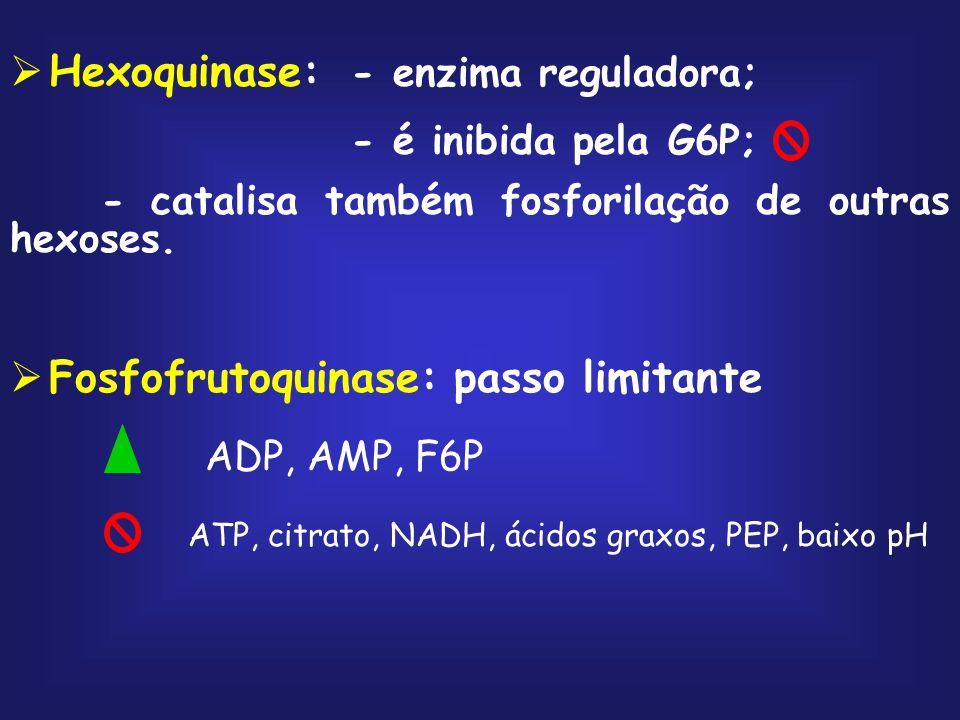 Hexoquinase: - enzima reguladora;