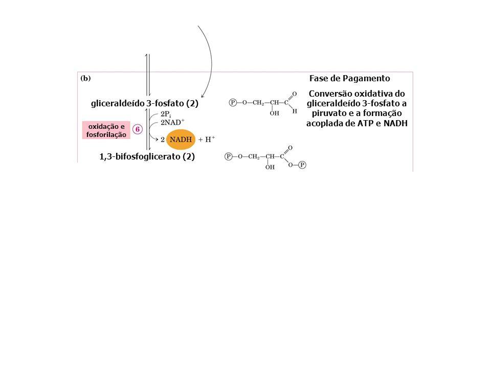 gliceraldeído 3-fosfato (2) oxidação e fosforilação