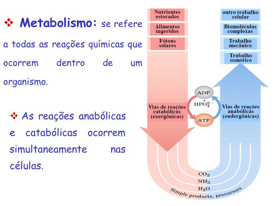 Metabolismo: se refere a todas as reações químicas que ocorrem dentro de um organismo.