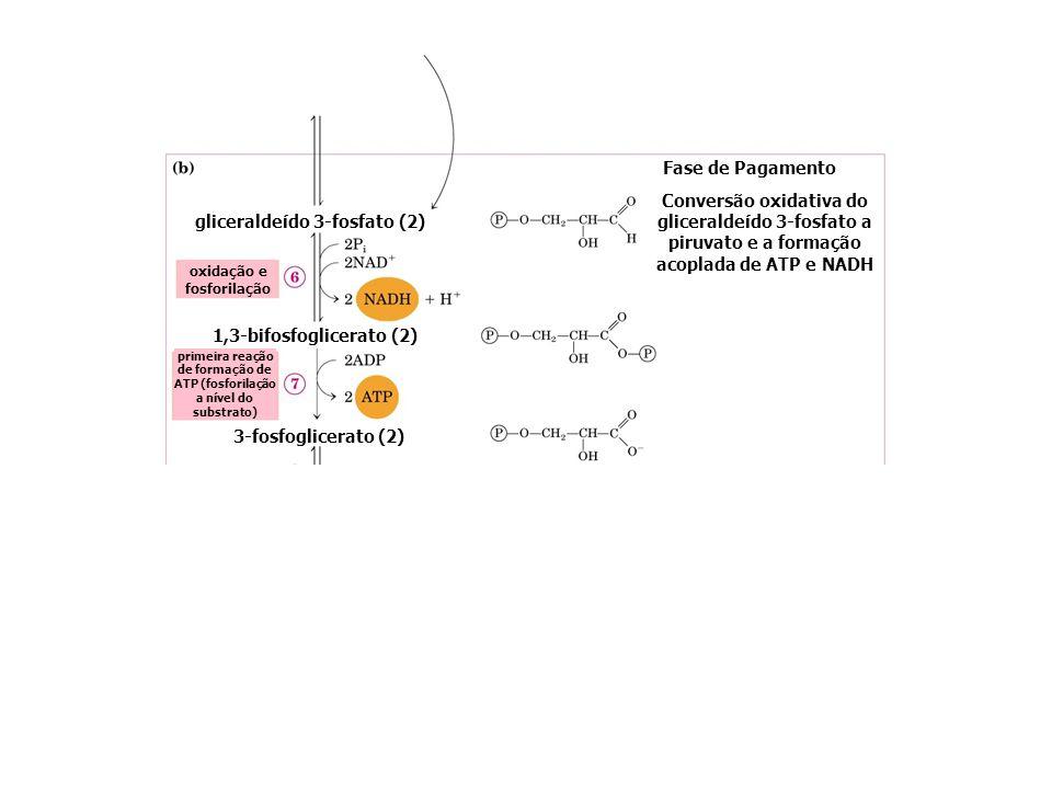 gliceraldeído 3-fosfato (2)