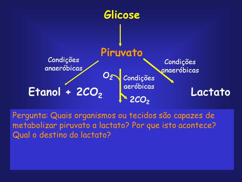 Glicose Piruvato acetil-CoA 4 CO2 + 4H2O