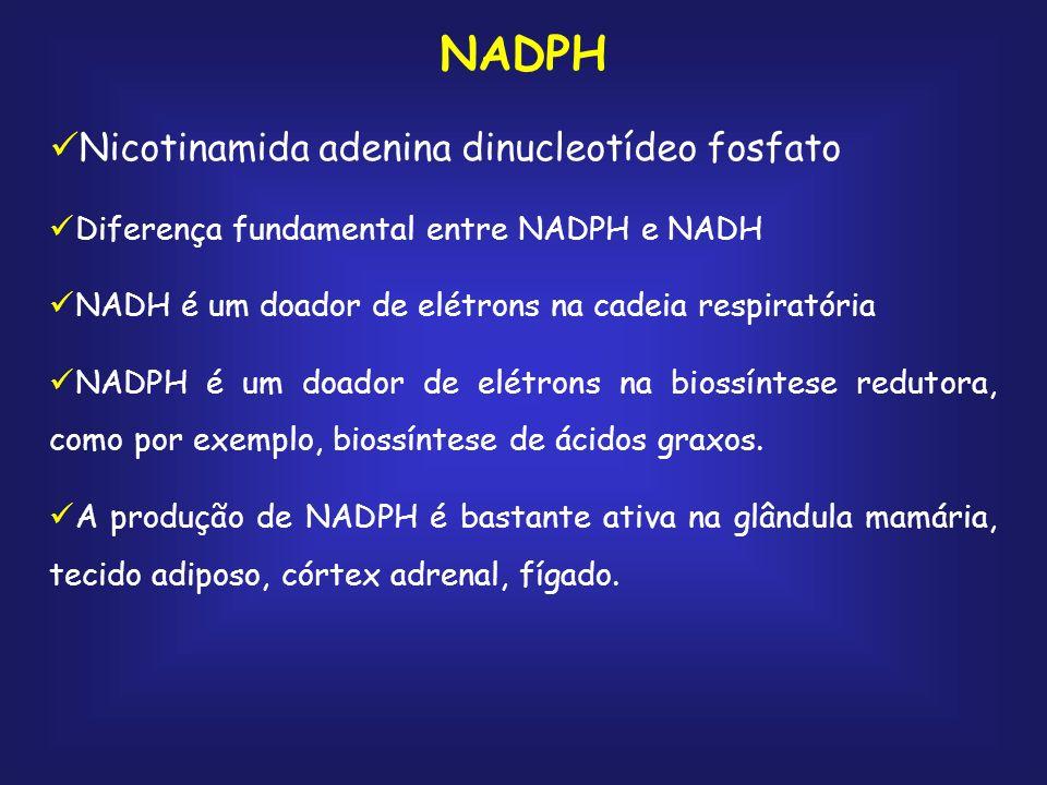 NADPH Nicotinamida adenina dinucleotídeo fosfato