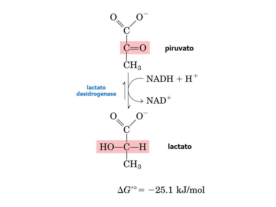 lactato desidrogenase