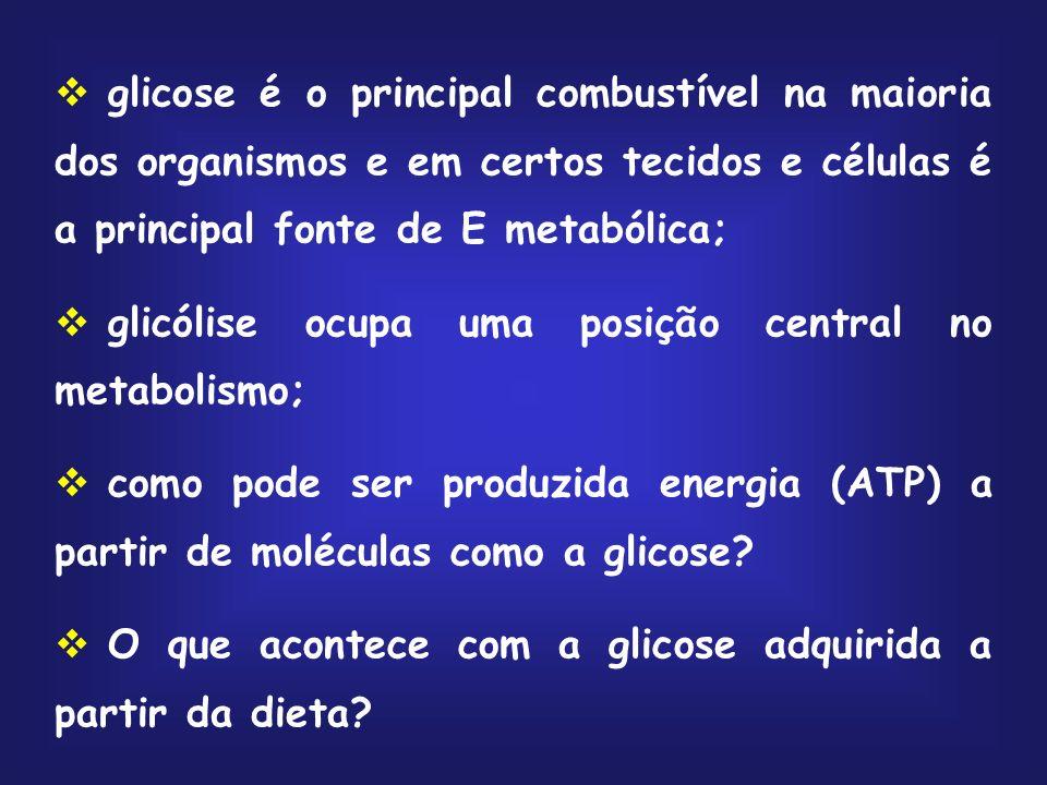 glicose é o principal combustível na maioria dos organismos e em certos tecidos e células é a principal fonte de E metabólica;