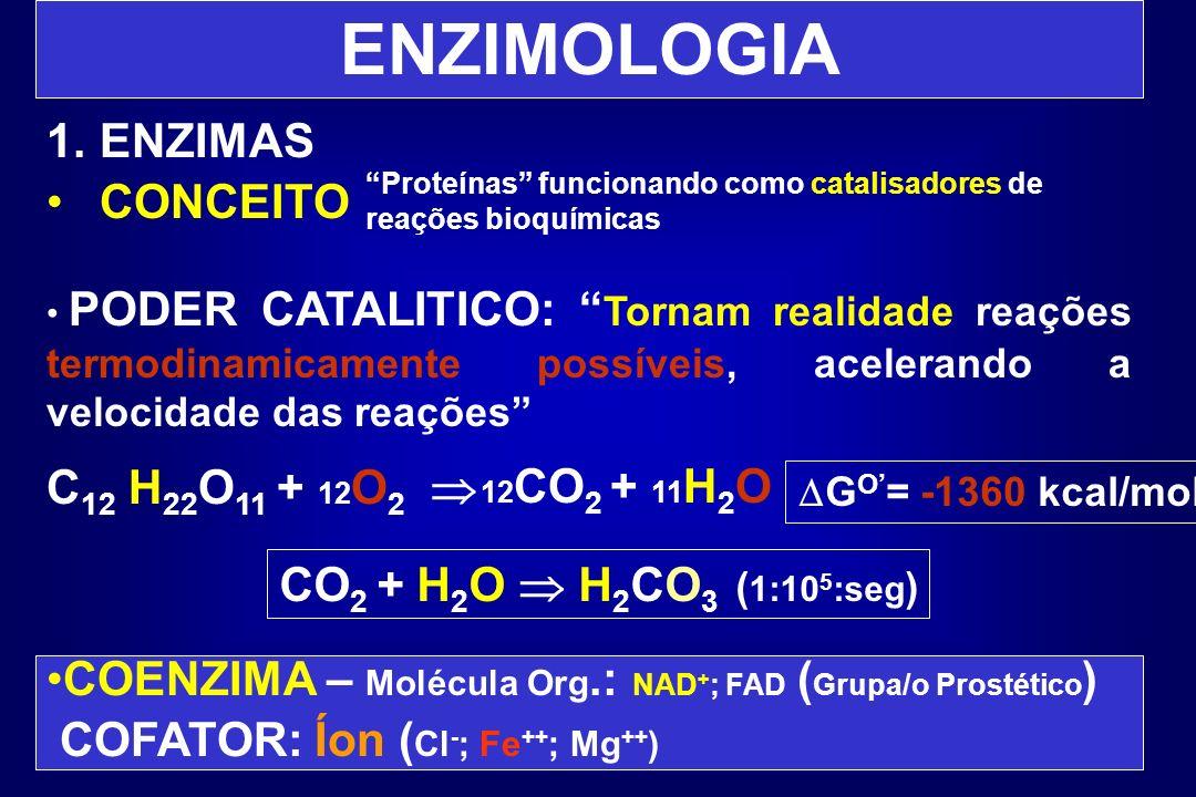 ENZIMOLOGIA ENZIMAS CONCEITO C12 H22O11 + 12O2 