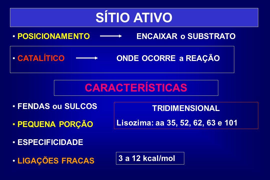 SÍTIO ATIVO CARACTERÍSTICAS POSICIONAMENTO ENCAIXAR o SUBSTRATO