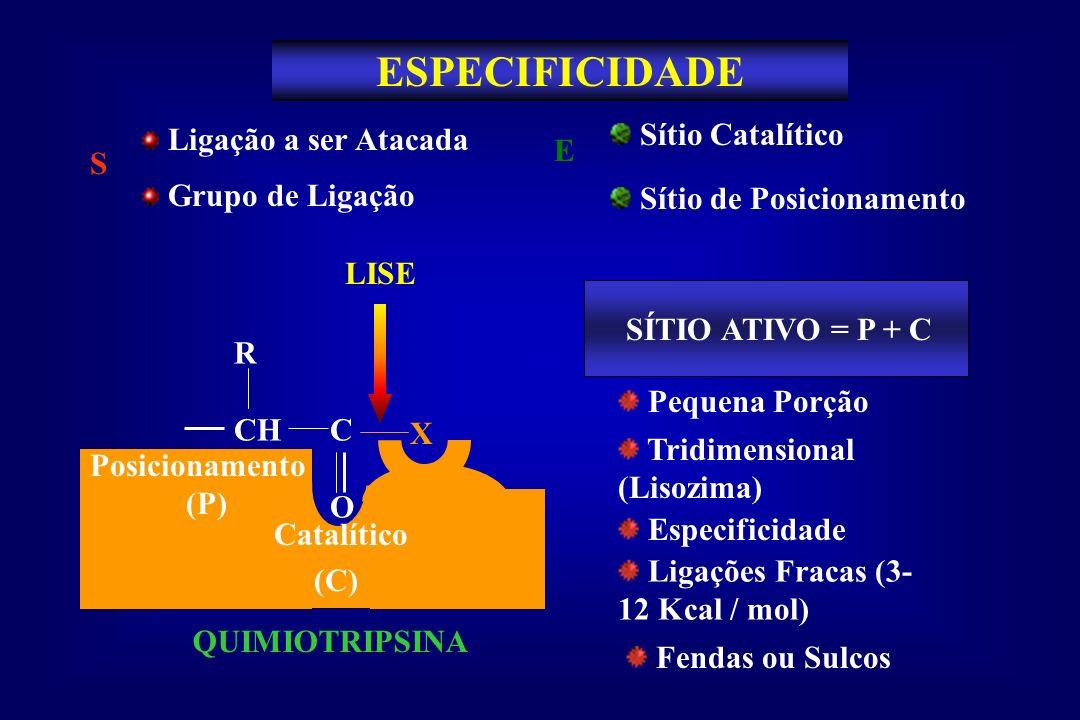ESPECIFICIDADE Sítio de Posicionamento Sítio Catalítico E S