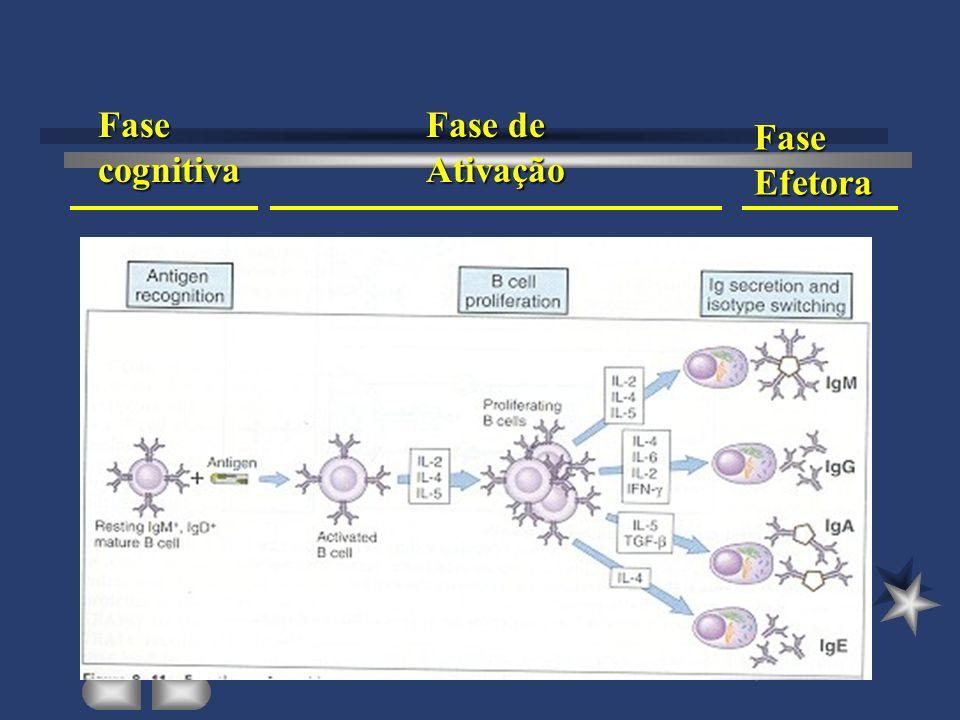 Fase cognitiva Fase de Ativação Fase Efetora