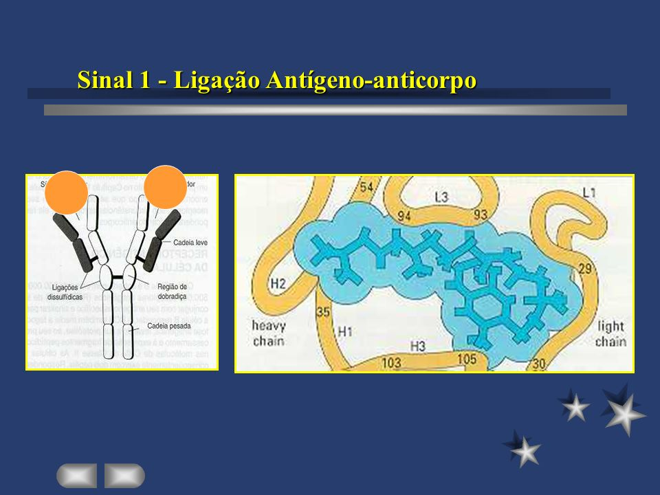 Sinal 1 - Ligação Antígeno-anticorpo