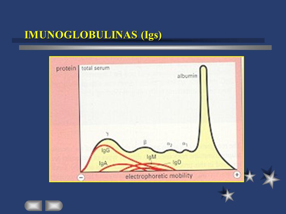 IMUNOGLOBULINAS (Igs)
