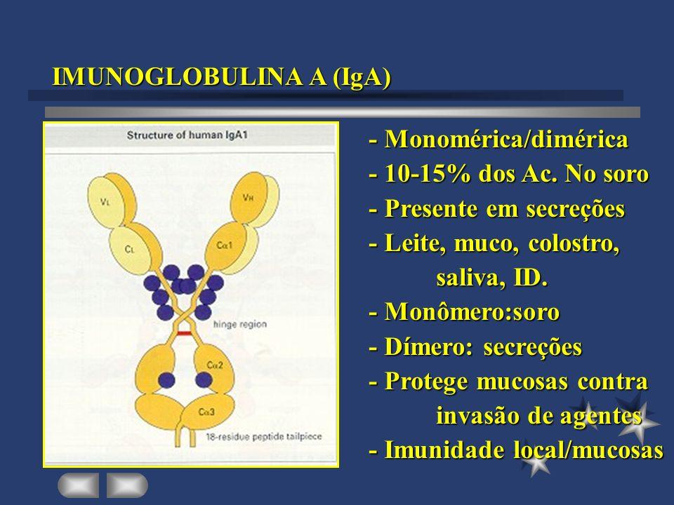 IMUNOGLOBULINA A (IgA)