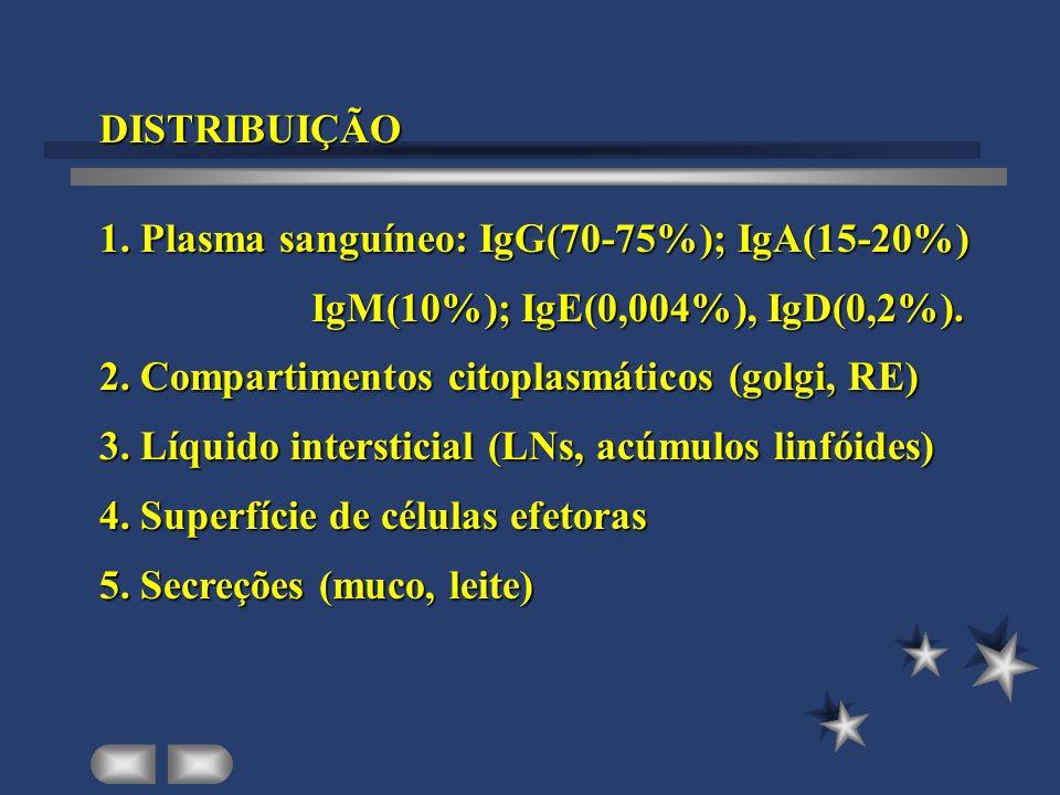 DISTRIBUIÇÃO 1. Plasma sanguíneo: IgG(70-75%); IgA(15-20%) IgM(10%); IgE(0,004%), IgD(0,2%). 2. Compartimentos citoplasmáticos (golgi, RE)