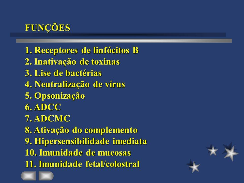 FUNÇÕES1. Receptores de linfócitos B. 2. Inativação de toxinas. 3. Lise de bactérias. 4. Neutralização de vírus.