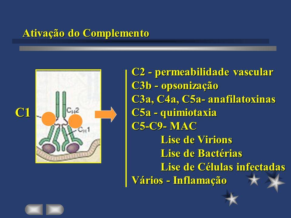 C1 Ativação do Complemento C2 - permeabilidade vascular