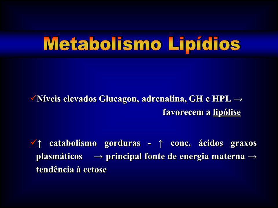Metabolismo Lipídios Níveis elevados Glucagon, adrenalina, GH e HPL → favorecem a lipólise.