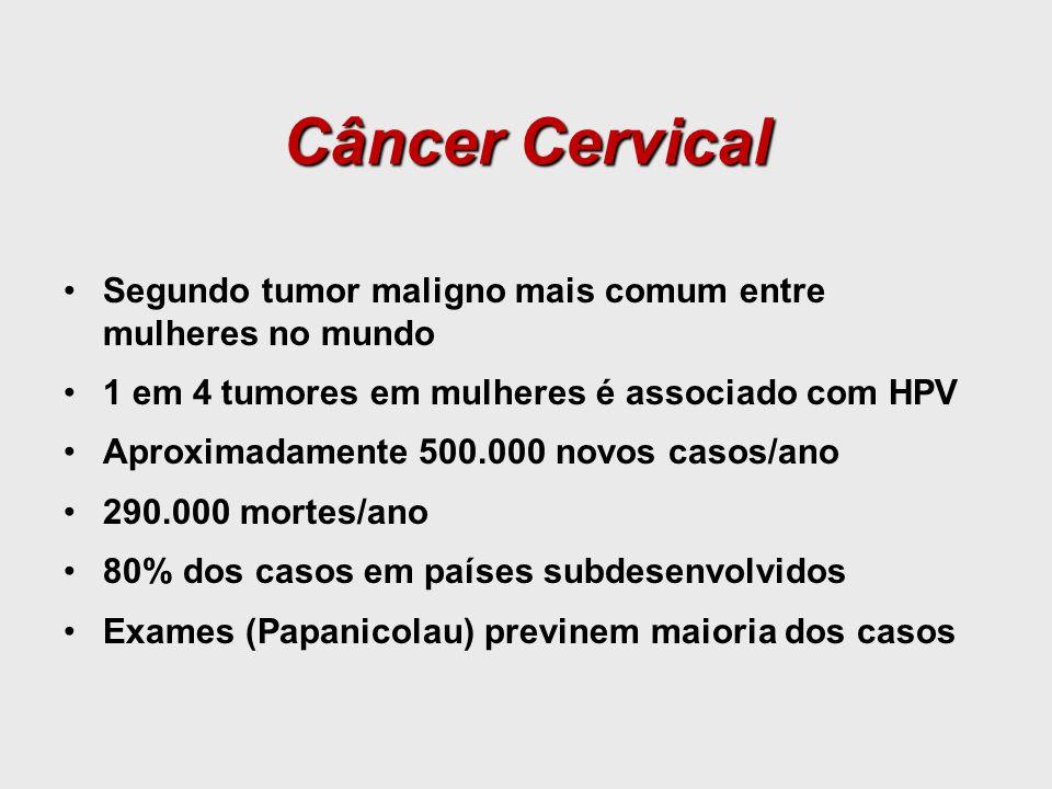 Câncer Cervical Segundo tumor maligno mais comum entre mulheres no mundo. 1 em 4 tumores em mulheres é associado com HPV.