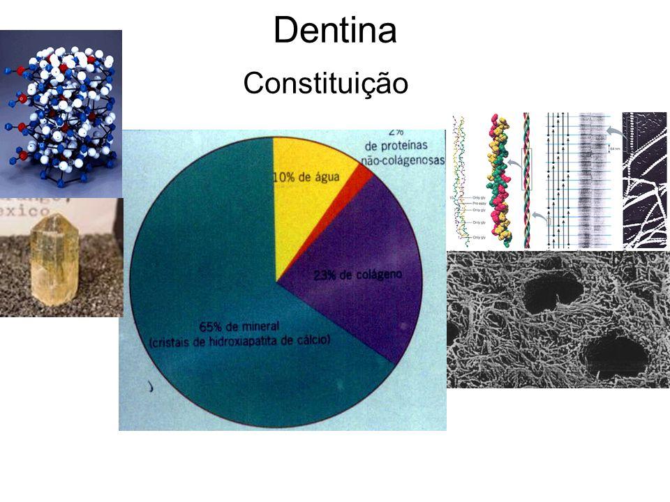 Dentina Constituição