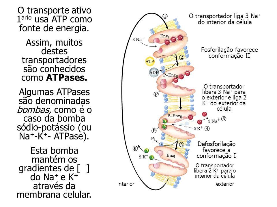 O transporte ativo 1ário usa ATP como fonte de energia.