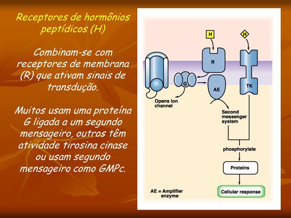 Receptores de hormônios peptídicos (H)