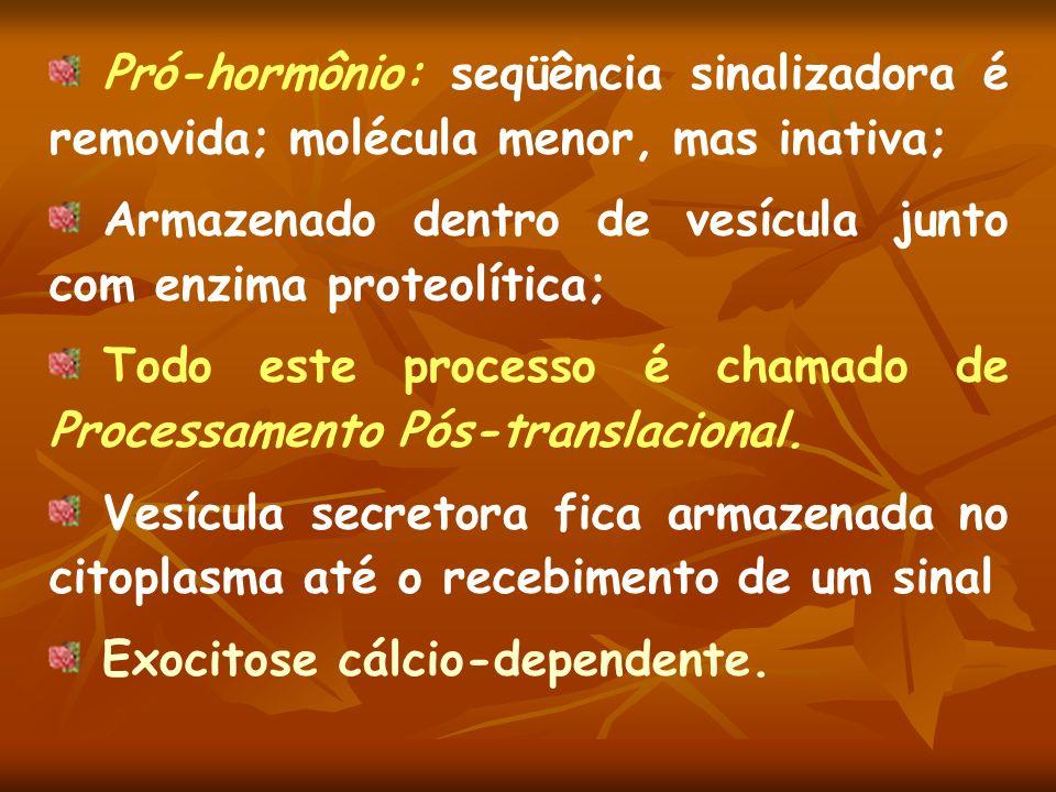Pró-hormônio: seqüência sinalizadora é removida; molécula menor, mas inativa;