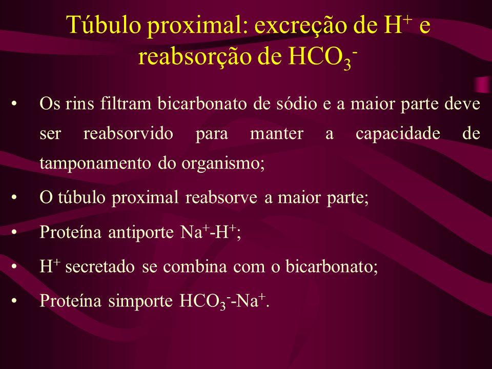 Túbulo proximal: excreção de H+ e reabsorção de HCO3-