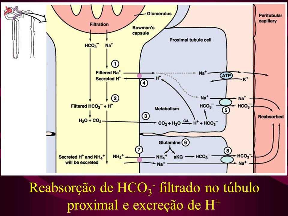Reabsorção de HCO3- filtrado no túbulo proximal e excreção de H+