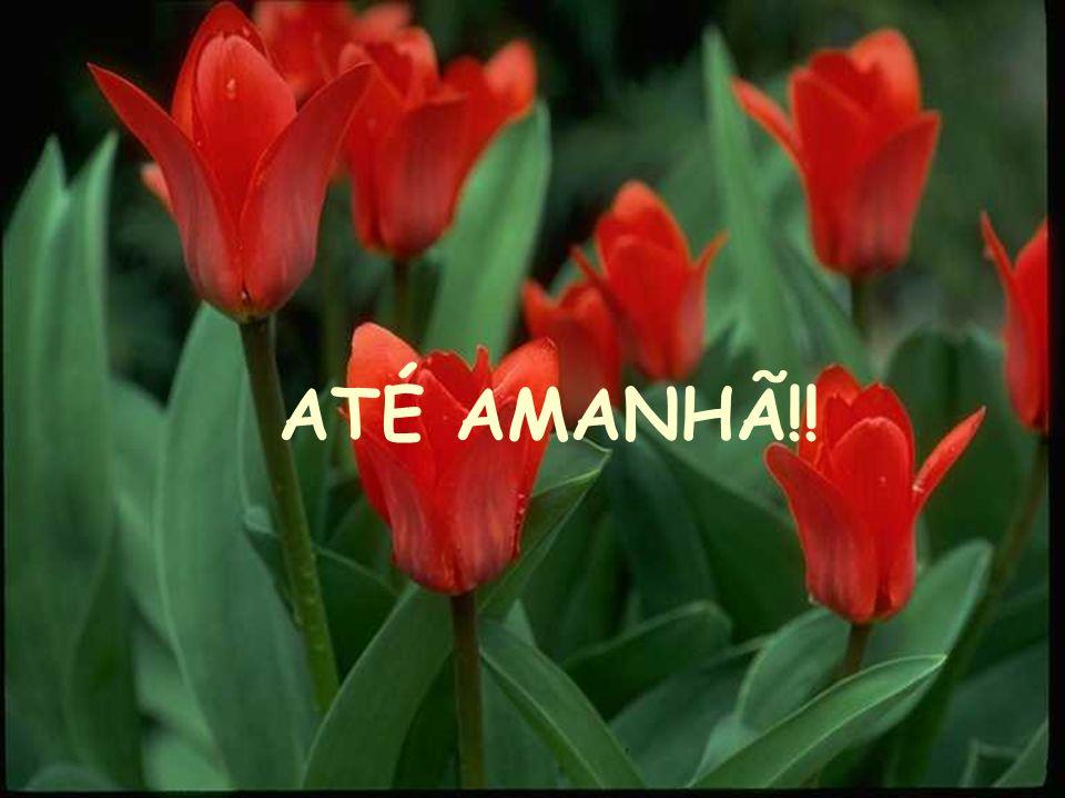 ATÉ AMANHÃ!!