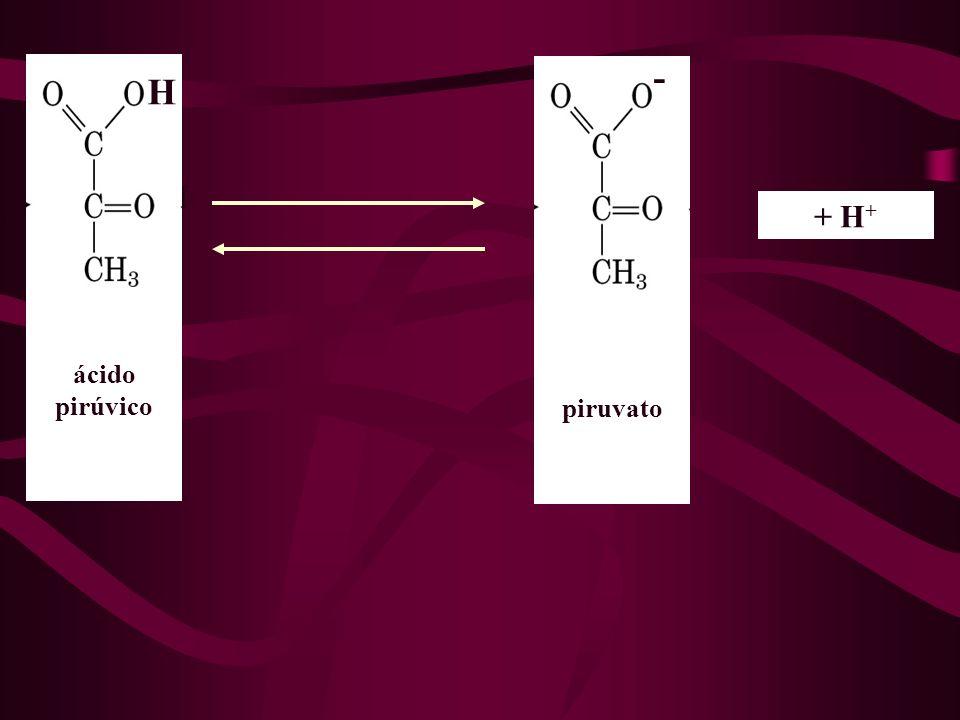 H - + H+ ácido pirúvico piruvato
