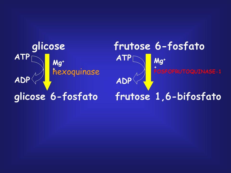 glicose frutose 6-fosfato