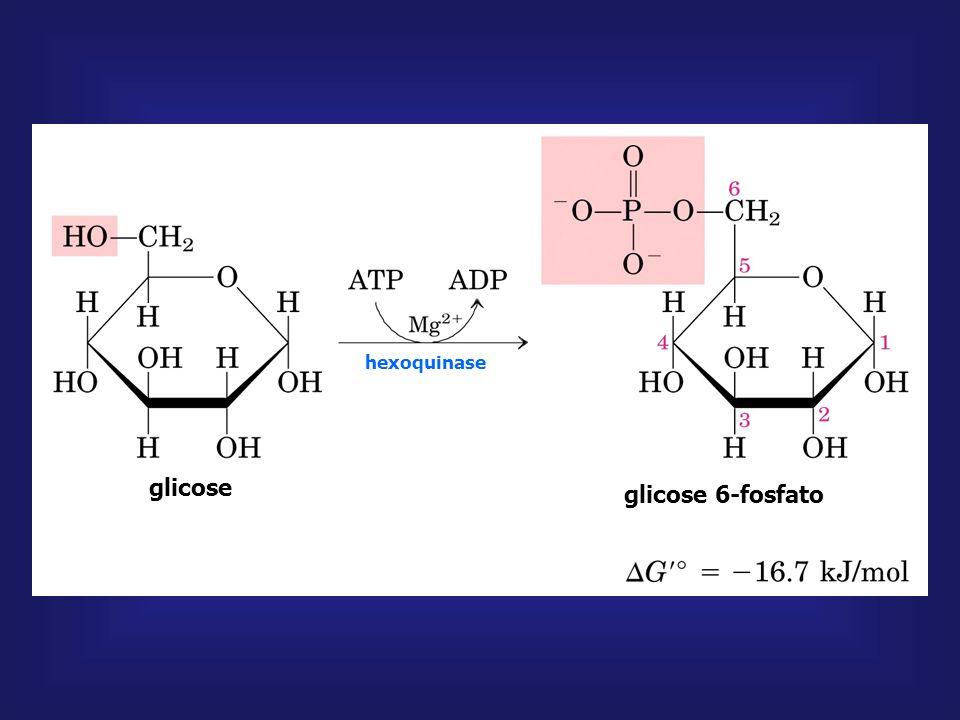 glicose glicose 6-fosfato